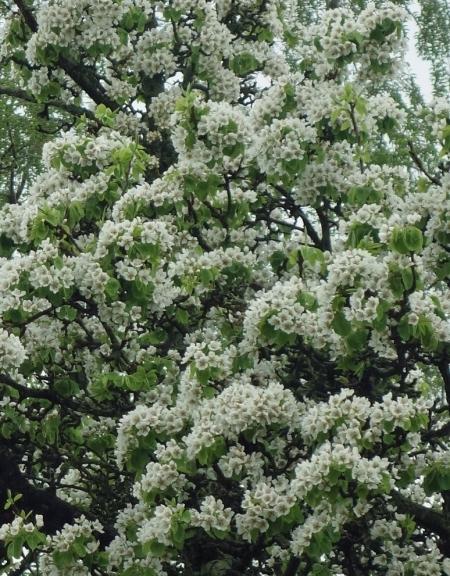 birnbaum gross